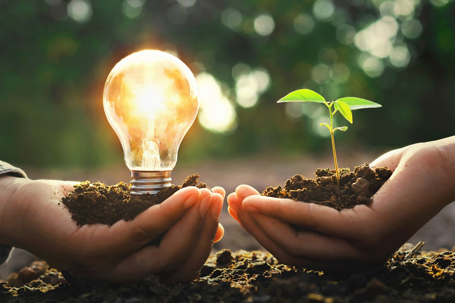hand holding lightbulb with small tree and sunshine. concept energy power in nature